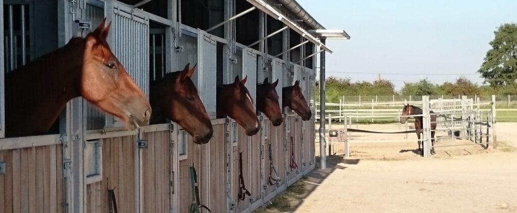 Pferdeboxen mit Tageslicht zur Vermietung