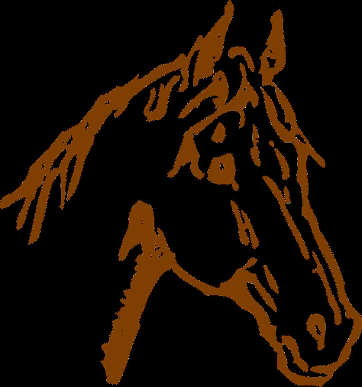 Pferdehof Cruywels